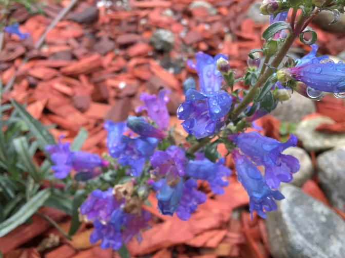 Native Garden: Catching Up Is Hard To Do